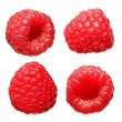 Raspberry Fruit Collections, isolated on white background. Macro — Stock Photo #38228957