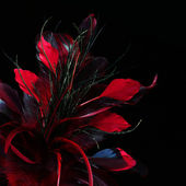 Red feathers over black background — Stock Photo
