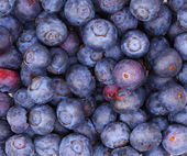 Blueberry background. Macro — Stock Photo