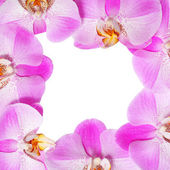 Orchid Flowers Frame isolated on white background. Beautiful — Stock Photo