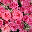 Stock Photo: Pink roses and gypsophila. Background