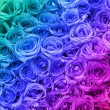 Stock Photo: Colorful Roses. Background.