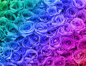 Colorful Roses. Background. — Stock Photo