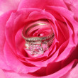 Engagement and wedding rings in pink rose. Closeup — Stock Photo