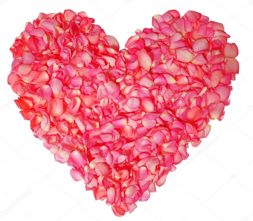 p tales de roses en forme de coeur isol sur fond blanc photographie guzel 41369337. Black Bedroom Furniture Sets. Home Design Ideas