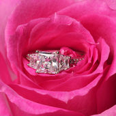 Engagement rings in pink rose. Closeup — Stock Photo
