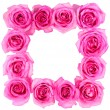 Hot Pink Roses Frame isolated on white background — Foto Stock