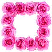 Hot Pink Roses Frame isolated on white background — Stock Photo