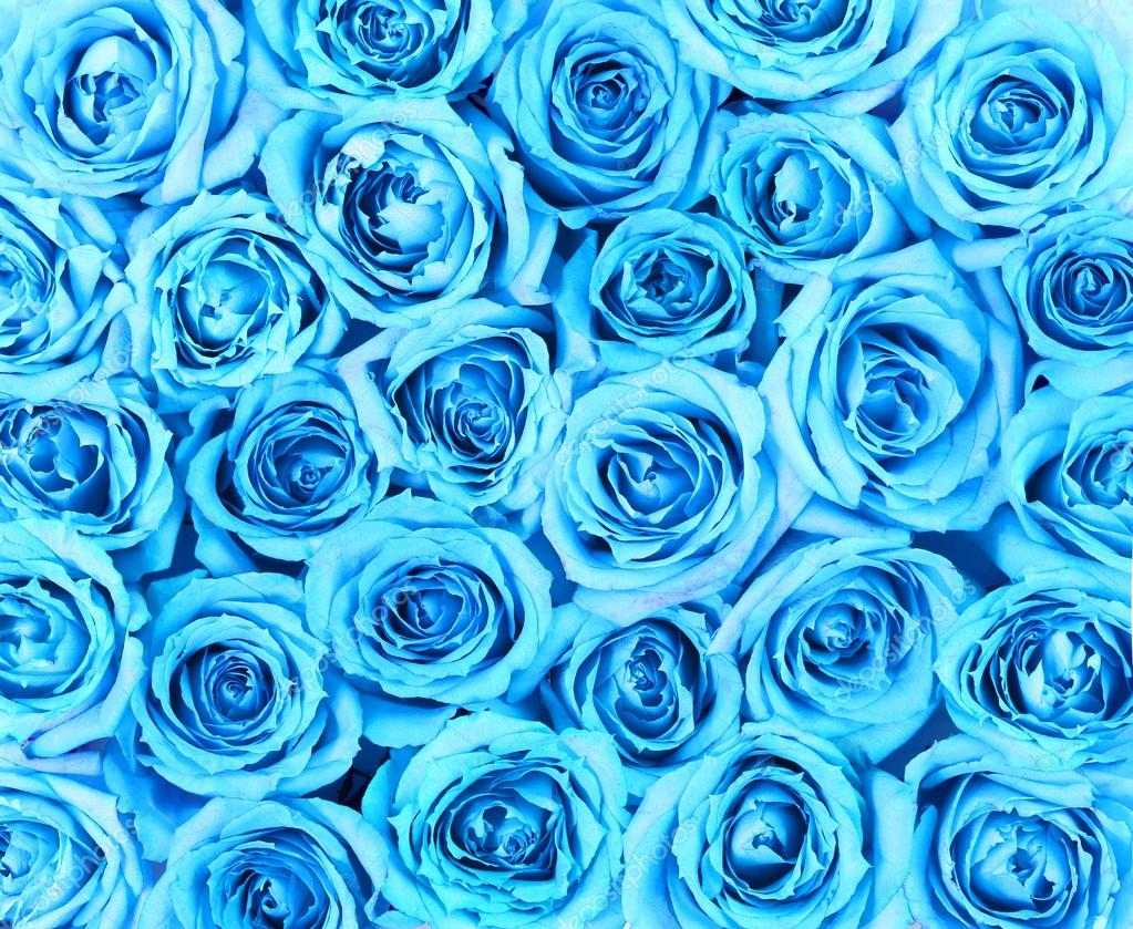 Turquoise Roses Background Stock Photo 169 Guzel 43652695