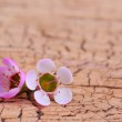 Purple Tiny Flowers on Old Wooden Background — Stock Photo #44860117