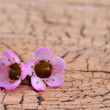 Purple Tiny Flowers on Old Wooden Background — Stock Photo #44860127