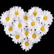 Chamomile flowers in Heart Shape on black background. Daisy — Stock Photo #45129671