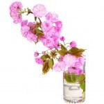 Sakura. Cherry blossom branch in glass vase isolated on white. B — Stock Photo #45616997