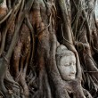 Buddha in tree roots — Stock Photo