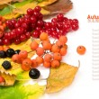 Autumn harvest — Stock fotografie