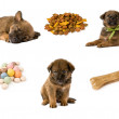 Set of images with the puppy and dog food — Stock Photo #13668890