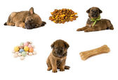 Ensemble d'images avec la nourriture chiot et chien — Photo