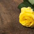 Single yellow rose — Stock Photo #18624349