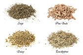 Collection d'herbes séchées isolés — Photo