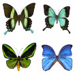 Collection of tropical butterflies — Stock Photo #20387643