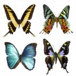 Royalty-Free Stock Photo: Collection of tropical butterflies