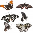 Set of butterflies — Stock Photo #20496219