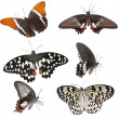 Foto de Stock  : Set of butterflies