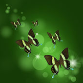 Background with tropical butterflies — Stock Photo