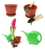 Set of tools for gardening and hyacinth in a pot — Stock Photo