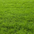 Background with green grass — Foto Stock #24347375