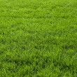 Stock Photo: Background with green grass