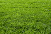 Background with green grass — Stock Photo
