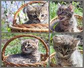 Gray tabby kitten in a basket — Stock Photo