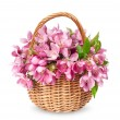 Stock Photo: Basket with blooming apples