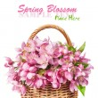 Wicker basket with pink spring flowers — Stock Photo #24737567