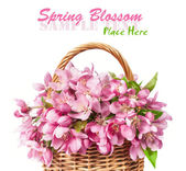 Wicker basket with pink spring flowers — Stock Photo