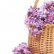bouquet of lilac flowers in a wicker basket  — Stock Photo