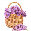 Bouquet of lilac in a wicker basket — Stock Photo