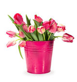 Red tulips in a bucket — Stock Photo