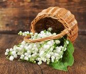Buquê de lírios do vale em uma cesta de vime — Foto Stock