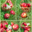 Set of apples in a basket — Stock Photo #25258963