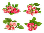 Set of pink roses — Stock Photo