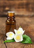 Essential oil and blooming jasmine — Stock Photo