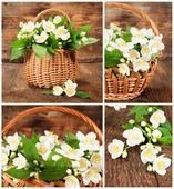 Set of images with jasmine in wicker basket — Stock Photo