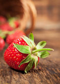Ripe strawberry close-up — Stock Photo