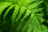 Fern leaf close-up — Stock Photo