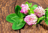 Clover on wooden background — Stok fotoğraf