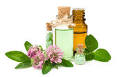 Blooming clover and aromatic oils — Stock Photo