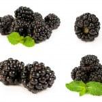 Set blackberries close-up — Stock Photo #30107121