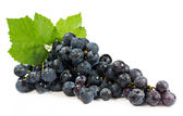 Bunch of blue grapes — Stock Photo